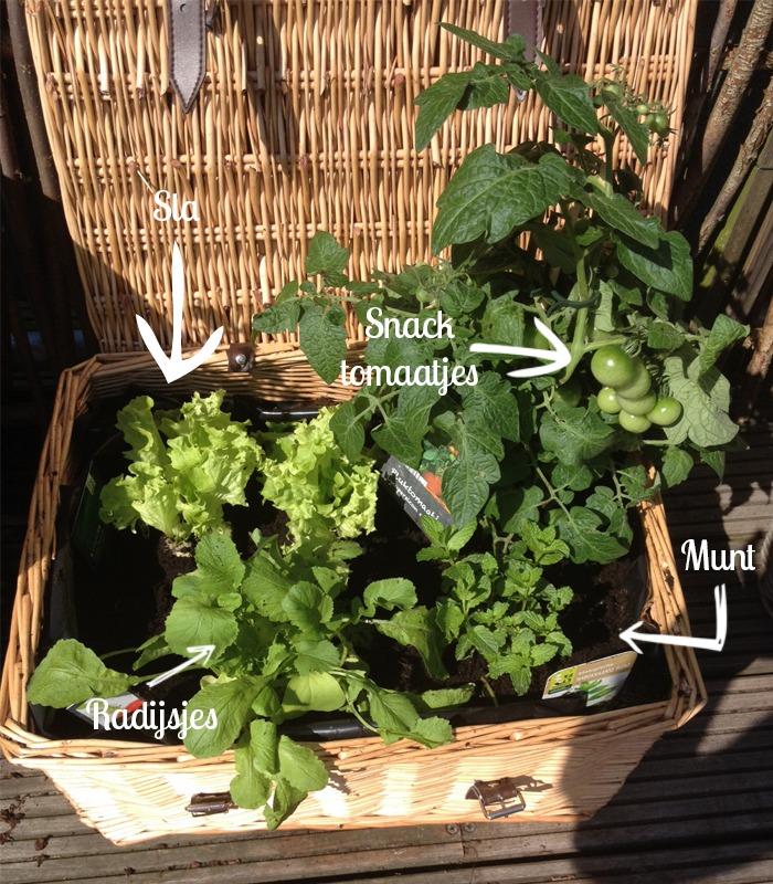 sla snacktomaten groentetuin