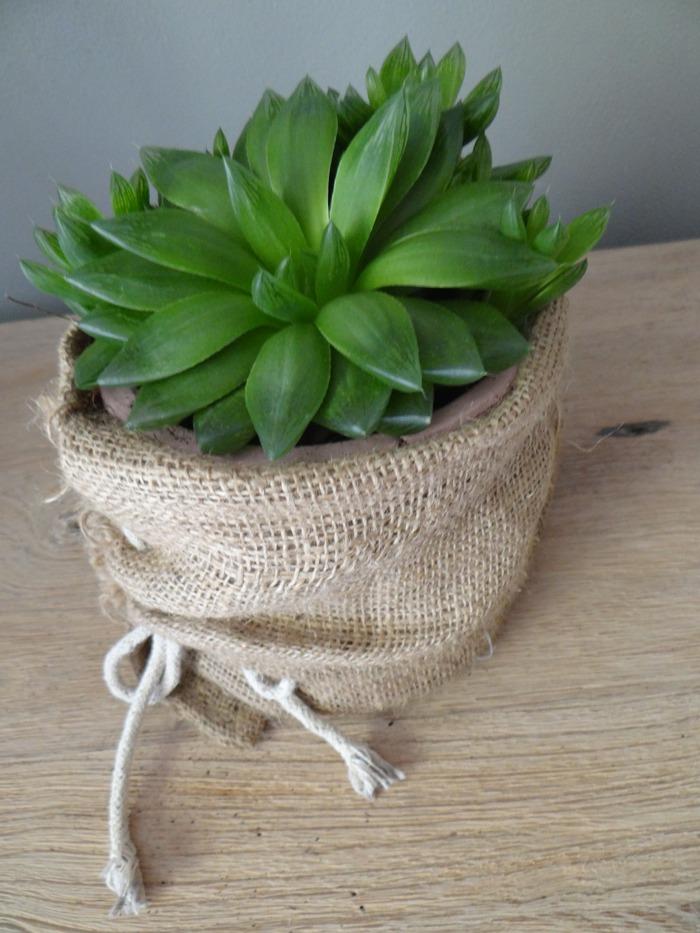 bloempot jute met plant