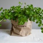 Paperbag als plantenpot