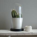 Verliefd op Cactus