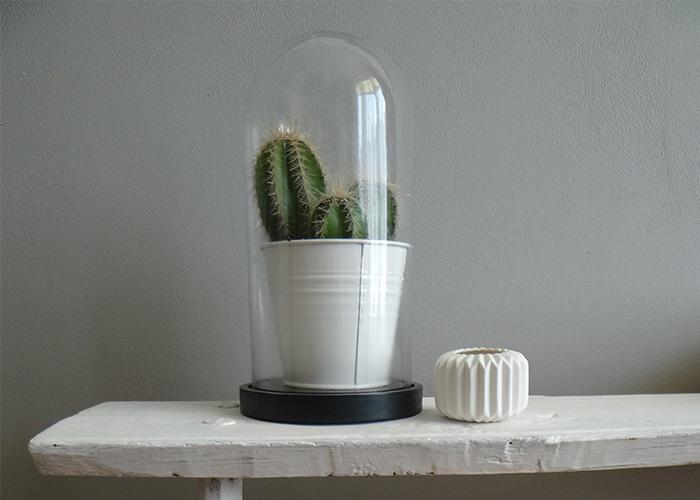 cactus stolp
