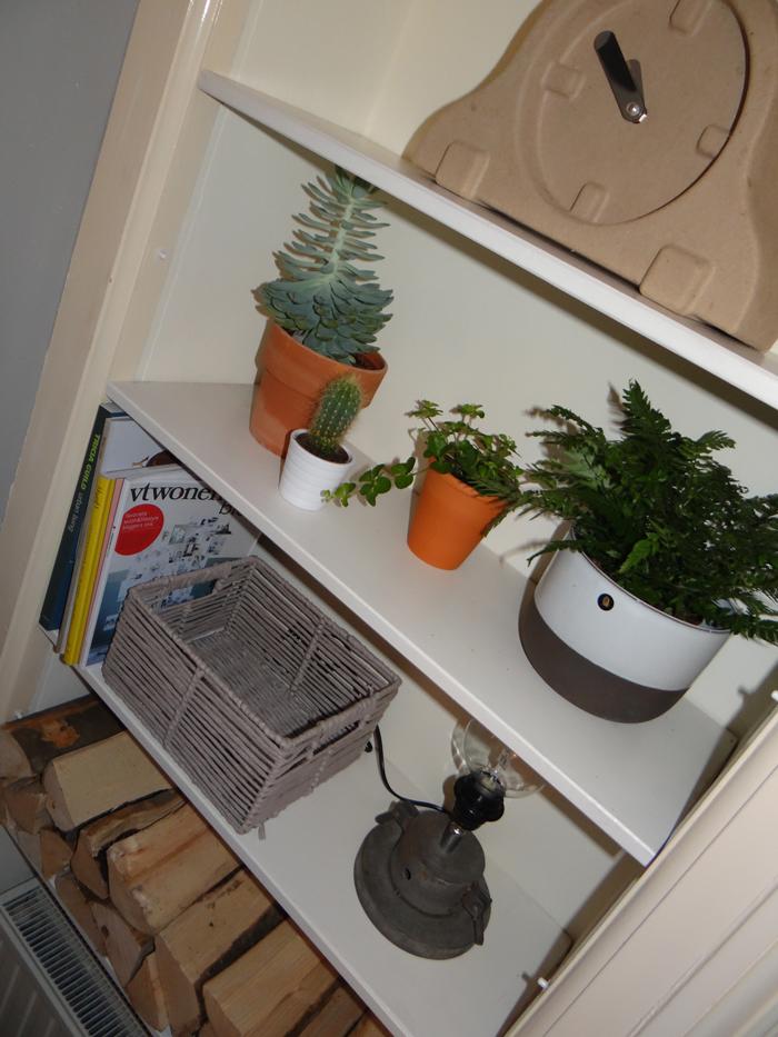 kleine plantjes in de kast