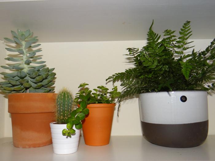 kleine varens in huis
