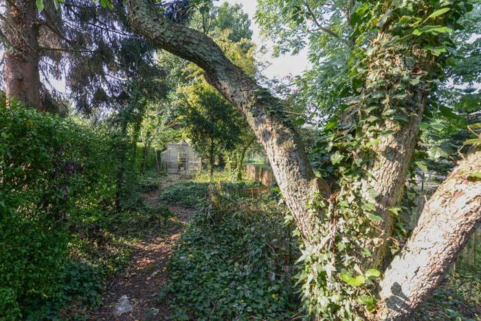 junglepad in de tuin