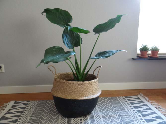 plant wordt bloempot