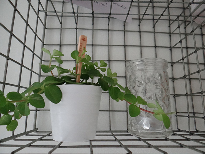plant in wandrek