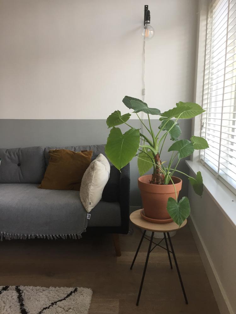krukje disc met plant