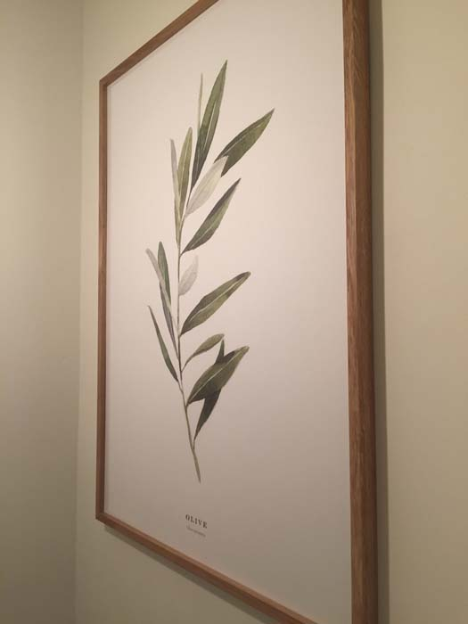 groene olijftak in trappenhal