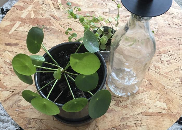 planten bij elkaar interieur trends najaar