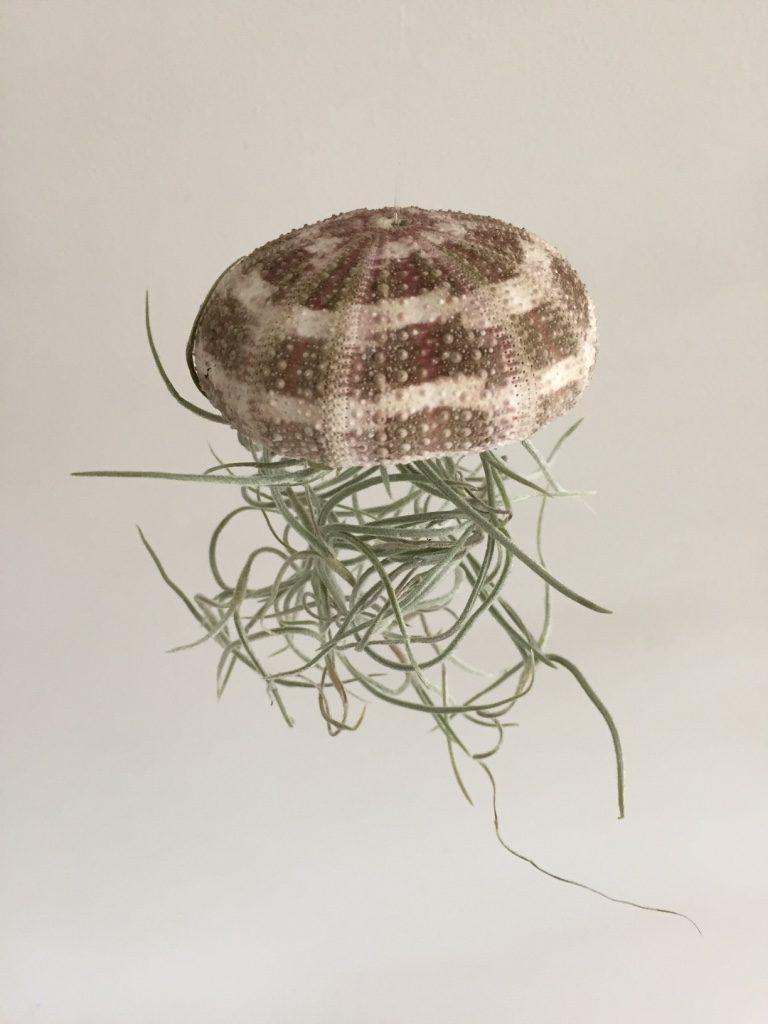 jellyfish airplant closeup