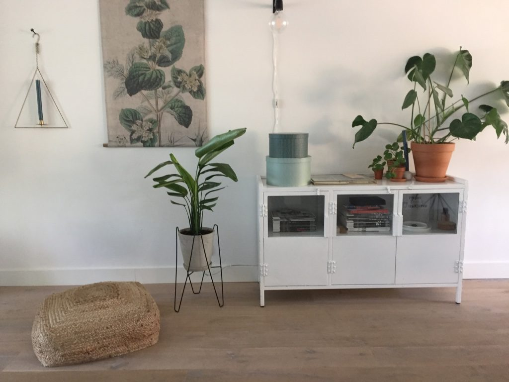 travellers palm in woonkamer