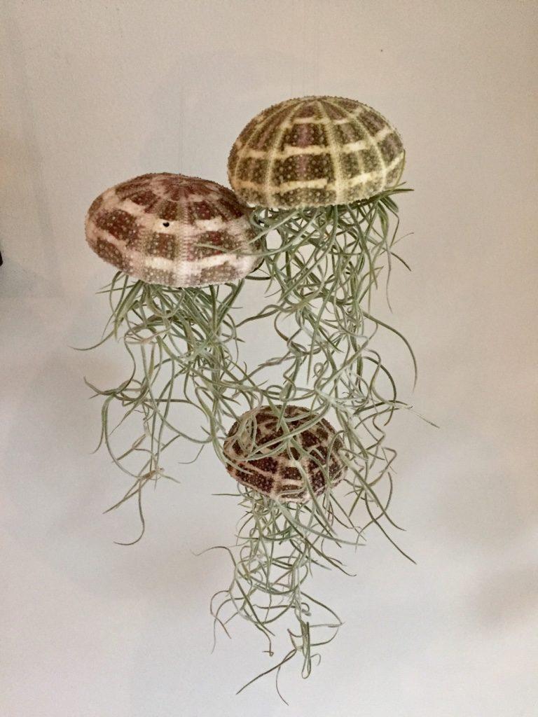 jellyfish airplantjes